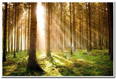 TreesPrint